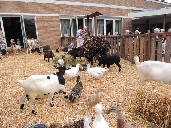 Oud en jong, mens en dier genieten van elkaar in Meulenhof